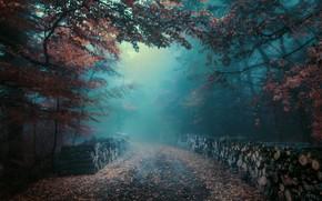 Картинка дорога, осень, лес, туман, дрова