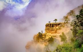 Картинка лето, горы, природа, туман