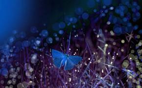 Картинка трава, макро, ночь, бабочка, боке, Eleonora Di Primo