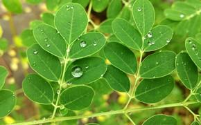 Картинка green, nature, drop, macro, leaf, water drop, rain drop