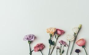 Картинка цветы, фон, розы, colorful, vintage, pink, flowers, background, roses, violet, гвоздики