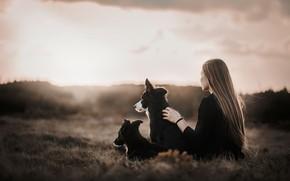 Картинка собаки, девушка, утро