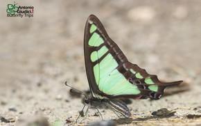 Картинка фон, бабочка, бирюзовая