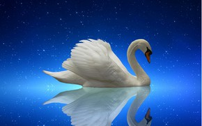 Картинка swan, nature, night, lake, starry night