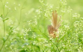 Картинка трава, луг, птичка