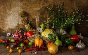 Обои урожай, натюрморт, овощи, autumn, still life, vegetables, harvest