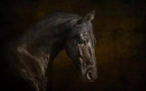 Картинка конь, лошадь, красавец, вороной