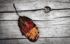Картинка осень, лист, доска