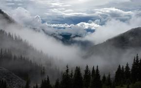 Картинка Небо, Природа, Облака, Горы, Деревья, Лес, Ель, USA, Пейзаж, Nature, Clouds, Sky, United States, Landscape, …