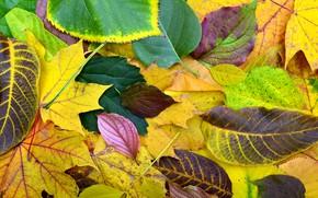 Картинка осень, листья, фон, colorful, wood, background, autumn, leaves, осенние