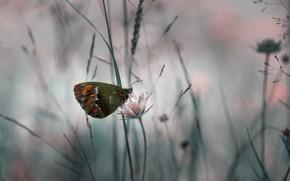 Картинка цветок, трава, макро, природа, бабочка, насекомое
