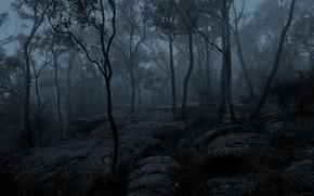 Картинка зима, лес, деревья, природа, туман, утро, Австралия, монохром