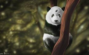 Картинка Дерево, Взгляд, Панда, Арт, Инь и ян, Кунг-Фу, Животное, Баланс, Yin and Yang, По, Skadoosh, …