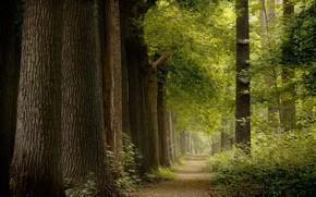 Картинка лето, природа, парк