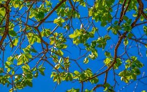 Картинка лето, небо, листья, ветки, дерево, весна, summer, leaves, spring