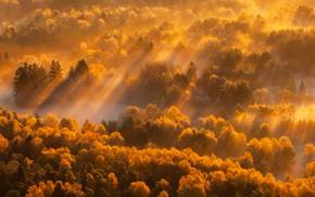 Картинка осень, лес, туман, утро