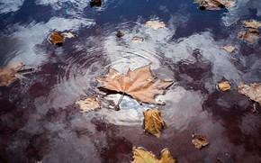 Картинка природа, лист, лужа