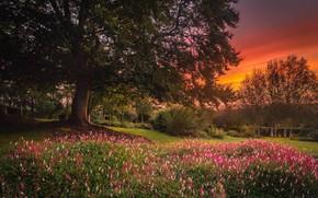 Картинка деревья, пейзаж, закат, цветы, природа, сад