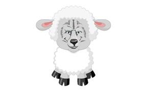 Картинка волк, белый фон, шутка, овца