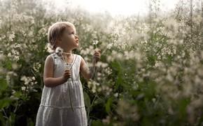 Картинка природа, одуванчик, девочка