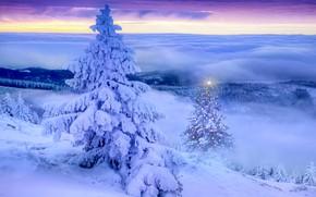 Картинка зима, пейзаж, елка, вечер