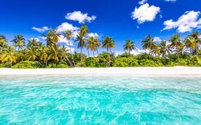 Картинка пляж, пальмы, океан, Сейшелы, Индийский океан