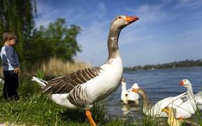 Картинка лето, небо, трава, взгляд, птицы, природа, поза, пруд, река, синева, птица, голубое, берег, ребенок, мальчик, …
