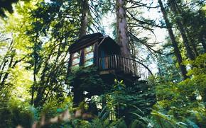 Картинка лес, лестница, дом на дереве