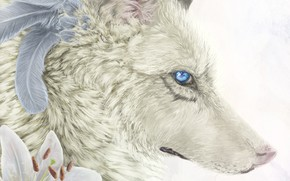 Картинка цветы, лилии, волк, перья, нарисован