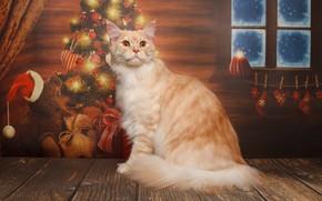 Картинка кошка, кот, рыжий, Новый год, ёлка, котейка, Мейн-кун, Наталья Ляйс