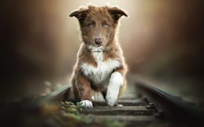 Картинка дорога, собака, щенок