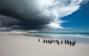 Картинка море, пляж, небо, облака, птицы, тучи, берег, стая, пингвины, прогулка