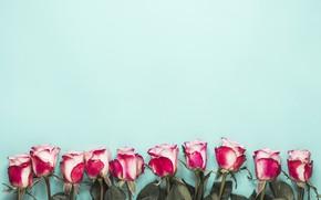 Картинка фон, голубой, розы, бутоны, композиция