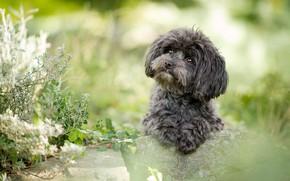 Картинка зелень, лето, взгляд, цветы, зеленый, камни, фон, милая, портрет, собака, растения, лапы, щенок, серая, мордашка, …