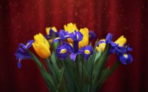 Картинка вода, капли, макро, цветы, тюльпаны, ирисы, боке