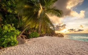 Картинка песок, море, пляж, лето, солнце, облака, пальма, камни, берег, джунгли, tropical