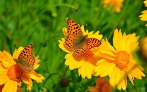 Картинка Весна, Бабочки, Цветочки, Flowers, Macro, Butterfly