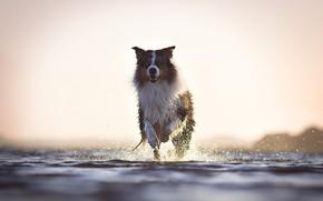 Обои река, друг, собака