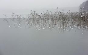Картинка зима, природа, туман, озеро, камыш