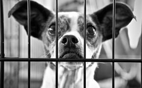 Картинка взгляд, друг, собака, решетка, уши