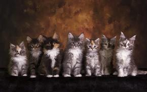 Картинка взгляд, кошки, поза, темный фон, котенок, котята, мех, малыши, компания, друзья, милашки, много, мордочки, мейн-кун, …