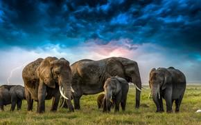 Картинка трава, тучи, молния, слоны, цапля, слонята