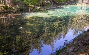 Картинка trees, nature, lake, reflection, Bodensee