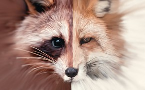 Картинка арт, лиса, енот, fox, art, масла