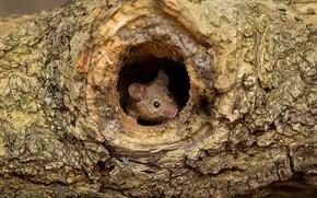 Картинка нора, мышь, сук