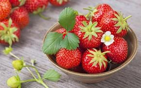 Картинка цветок, ягоды, клубника