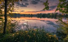 Обои осень, деревья, закат, озеро, парк, птица, лебедь