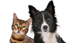 Картинка кот, портрет, собака, белый фон, друзья