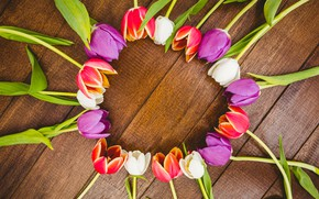 Картинка цветы, colorful, тюльпаны, red, white, fresh, wood, flowers, tulips, spring, purple, multicolored