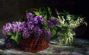 Картинка цветы, сирень, букетики